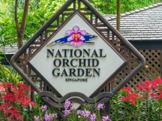 singapur-orchideengarten