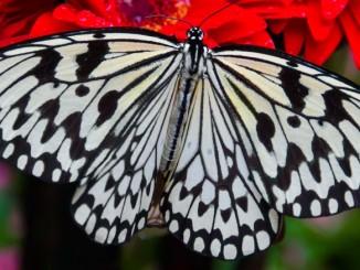 changi-butterfly-garden