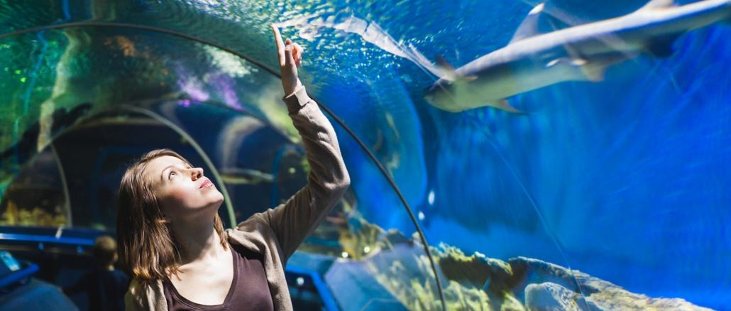 sentosa-sea-aquarium