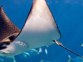 underwater-world-sentosa-singapore